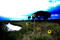"""Galveston Marshland Flowers"""